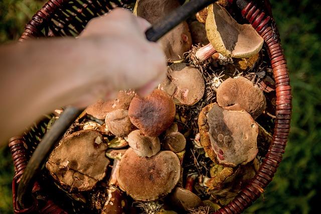 nasbírané houby.jpg